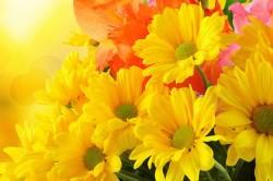 Пыльца цветов - причина аллергического ринита