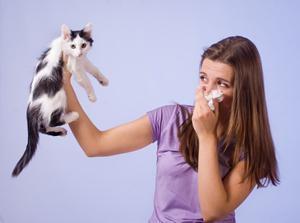 аллергия на котов