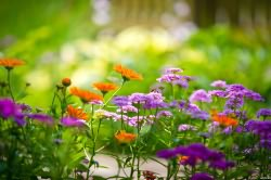 Цветочная пыльца как причина утреннего чихания и насморка