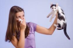 Аллергия на шерсть животных как причина утреннего чихания и насморка