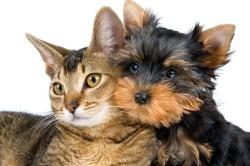 Аллергический ринит от шерсти животных