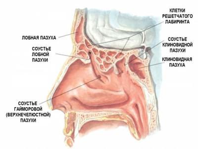 Гомеопатия при гайморите помогает при проблемах с пазухами