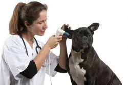 отит у собаки чем лечить