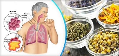 Анатомия дыхательной системы человека