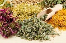 Лечение отита травяными сборами