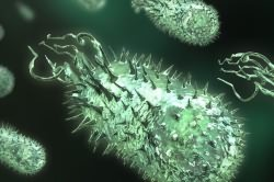 Пневмококки - возбудители пневмонии
