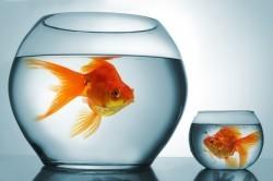 Аквариум с рыбками - прекрасный увлажнитель воздуха