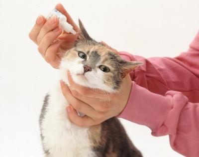 ушные капли для кошек от клещей