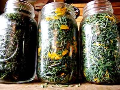 Эффективные травы от кашля
