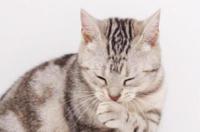 Кот не может мурлыкать хрипит