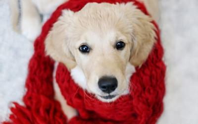 лечить бронхит у собак