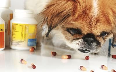 Лечение кашля у собак