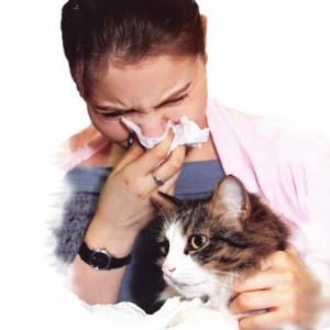 Чиханье при аллергии
