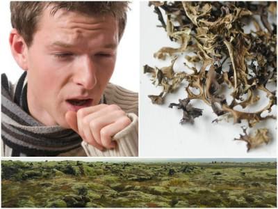 Исландский мох против кашля