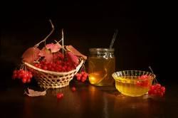 Калина с медом для лечения ринита