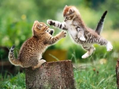 как вылечить насморк у котёнка