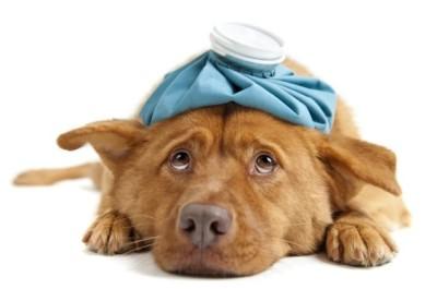 чем вылечить кожный зуд у собаки