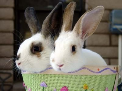 насморк у кроликов лечение