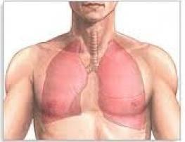 Признаки воспаления легких у взрослых