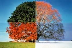 Периоды смены сезонов как фактор для проявления простуды