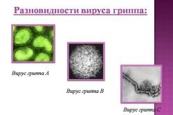 Разновидности вируса гриппа