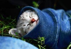 Простуда у кошек симптомы