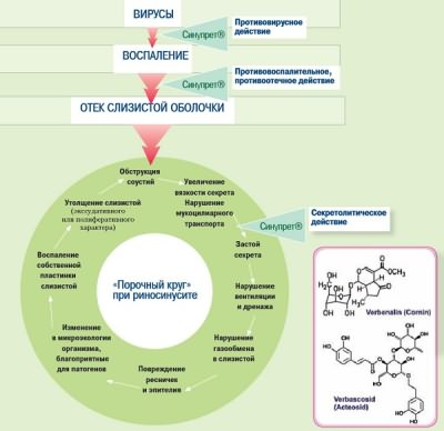 Принцип действия лекарства Синупрет при риносинусите