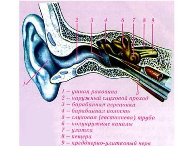 Отит внутреннего уха долго не проходит. Симптомы