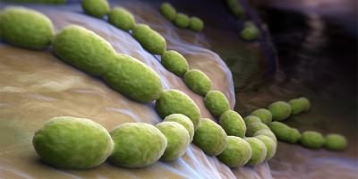 Бактерия пневмококка